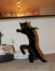 black cat dance